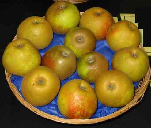 Picture of apple variety 'Egremont Russet'