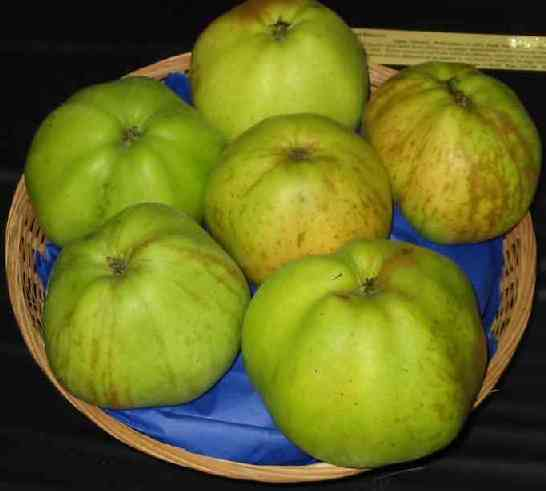 Picture of Apple Variety