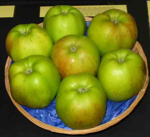 Lady Henniker apple