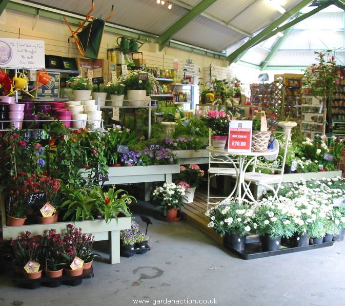 House plants for sale for Garden centre