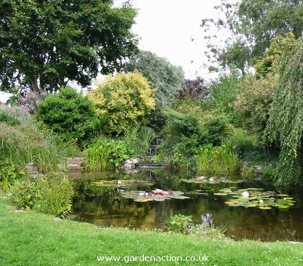 Blagdon water garden centre in bristol for The water garden