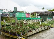 Signs in outdoor plants area at Dobbies, Birtley
