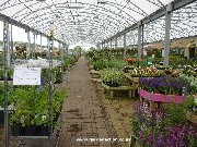 Covered plants area at Dobbies Dunfermline