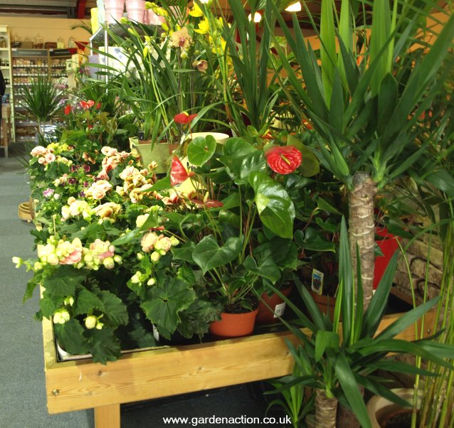 We review the cafe and more at the Fosseway Garden Centre