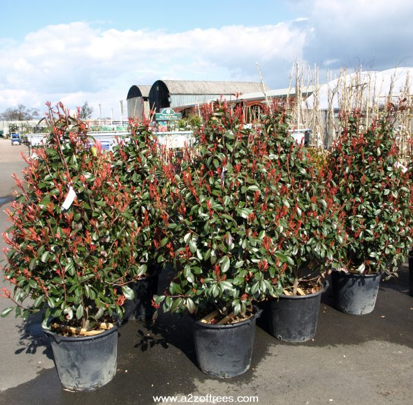 Our review of the fosseway garden centre in gloucestershire for Large bushes for landscaping