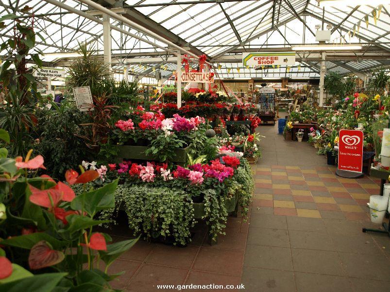 Garden Centre: We Review Christmas Shopping At Hollybush Garden Centre