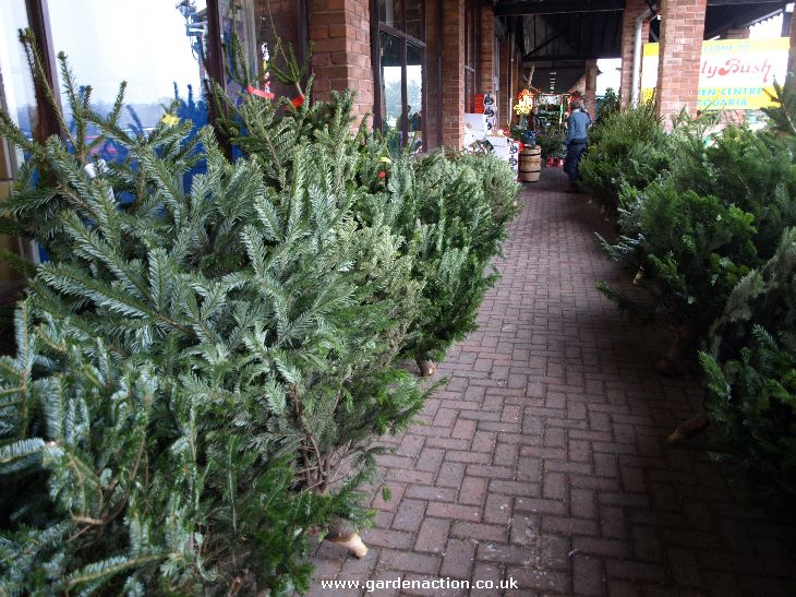 We Review Christmas Shopping At Hollybush Garden Centre