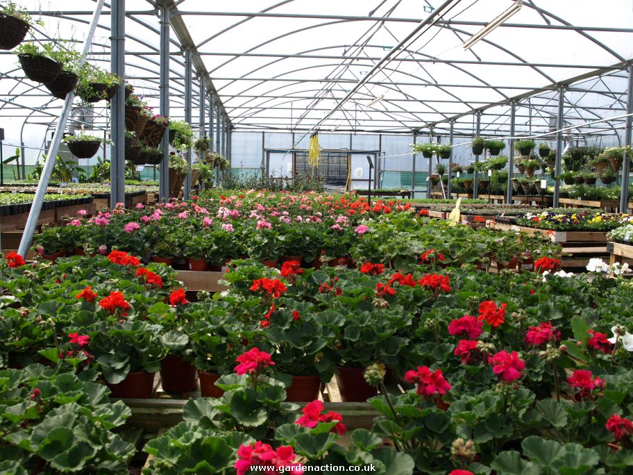 We visited kings hill nurseries in finham coventry for Plant nursery