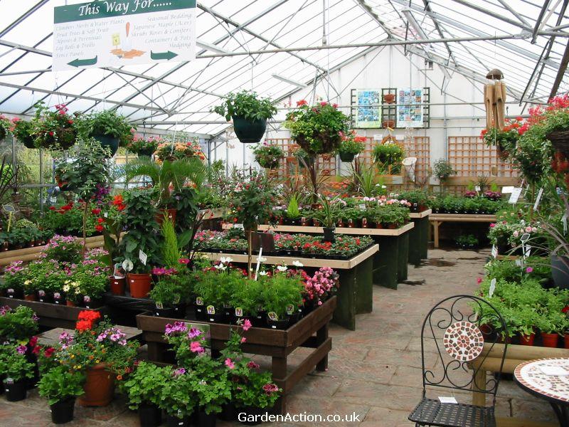 Garden Centre: Littlehurst Nurseries Garden Centre