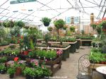 The covered plant sales area