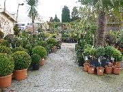 The outdoor plants area
