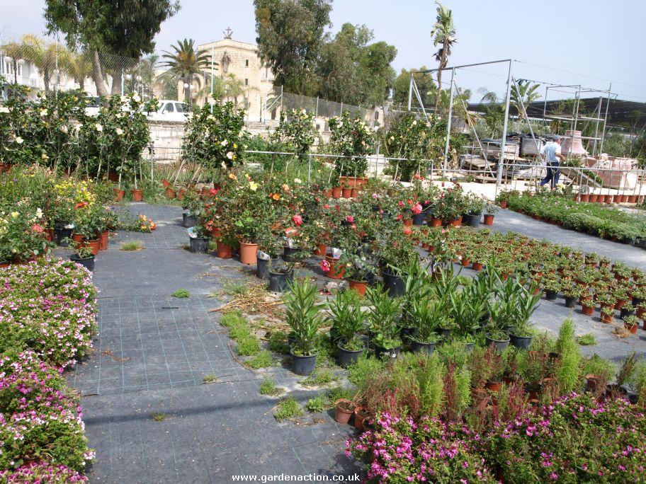 Garden Centre: Piscopo Garden Centre, Burmarrad In Malta