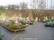 Plants area at the Trowell Garden centre