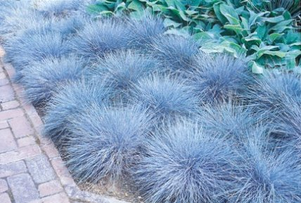 Gardening with grasses for Ornamental grass edging