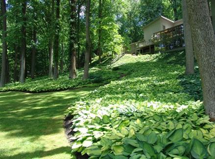 Shade Garden Plan Zone 6