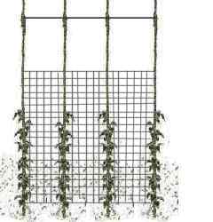Diagram of supporting pea plants