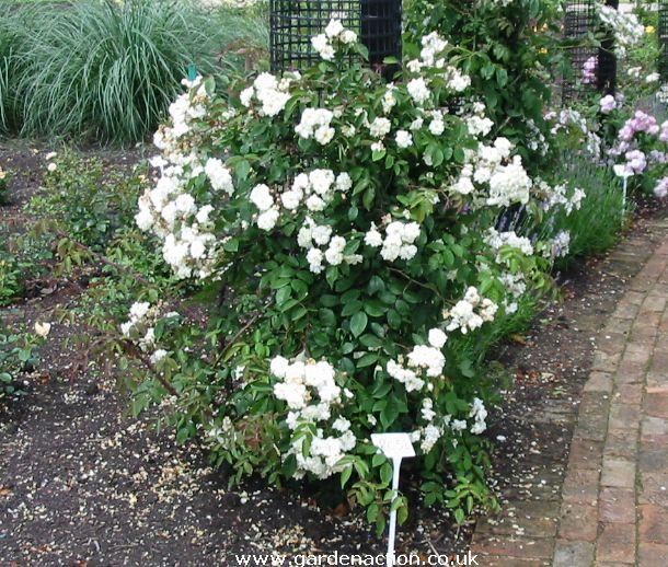 Комнатное растение бело зеленые