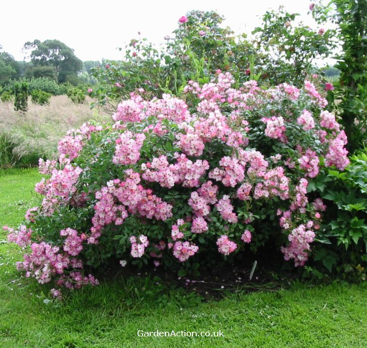 Click here for a detailed description of the characteristics of shrub