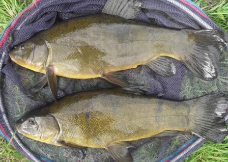 Stocking with fish and other animals for Colorado fish stocking